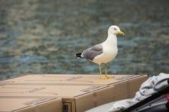 Bird, Gull, Seabird, Fauna royalty free stock photo