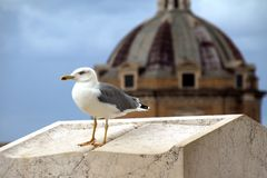 Bird gull sitting on a marble pedestal on a background of a dome stock photo