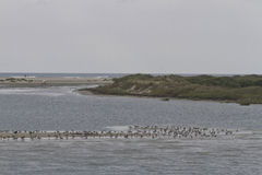 Bird Habitat of the Outer Banks, North Carolina Royalty Free Stock Photography