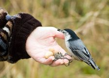 Bird In Hand Stock Photos