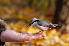 Bird on the hand Stock Photo