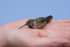A Bird In The Hand royalty free stock photo