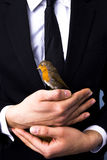 Bird in hand. Businessman has a bird in his hand Royalty Free Stock Image