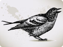 Bird, hand-drawing. Stock Photos