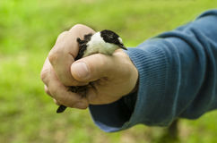 Bird in hand Stock Photo