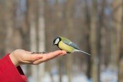 Bird on the hand Stock Photos