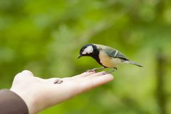 Bird on the hand in the park. Stock Photo