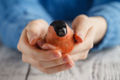 Bird in the hand symbol of care Royalty Free Stock Images
