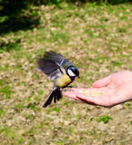 Bird on hand Stock Photography