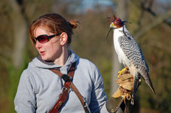 Bird handler with falcon Royalty Free Stock Images