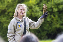Bird Handler with a Merlin Falcon Stock Photos