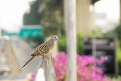Bird hang on the overpass. Close up bird hang on the overpass Royalty Free Stock Photography