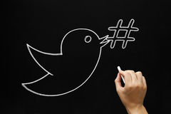 Bird Hashtag Concept. Hand sketching bird holding a hashtag symbol in its beak with white chalk on a blackboard Royalty Free Stock Image