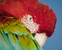 Bird head, colourful parrot portrait. Colorful nature background. Stock Images