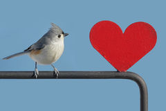 Bird With Heart Stock Photos