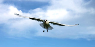 Bird from heaven into sky Royalty Free Stock Photos