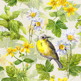 Bird, herbs, meadow flowers, spring grasses. Repeating pattern. Watercolour Royalty Free Stock Photo