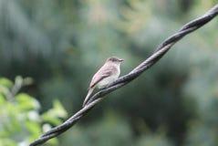 Bird. Here is a pretty bird enjoying the day Stock Image