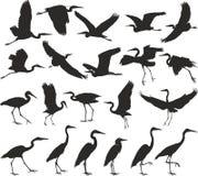 Bird - herons Royalty Free Stock Photos