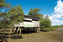 Bird hide in mangrove wetlands at Nudgee, Boondall Wetlands Stock Images