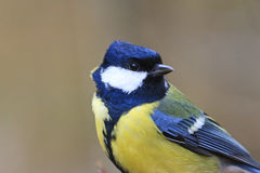 Bird hipster yellow and black Royalty Free Stock Images