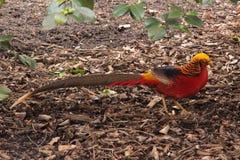 Bird in his own habitat Stock Photos