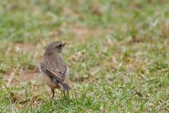 Bird and his prey Stock Photo