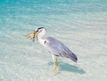 Bird holding fish in sea Royalty Free Stock Photography