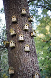 Bird homes Stock Photo