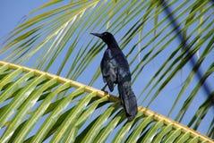 Bird in Honduras Royalty Free Stock Photo