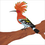 Bird hoopoe vector illustration,. Eurasian Hoopoe (Upupa epops), back profile, standing on a branch, isolated on a white background Royalty Free Stock Images