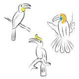 Bird Hornbill. Hornbill painting  on white background Royalty Free Stock Image