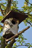 Bird house. On a tree in spring Stock Photos