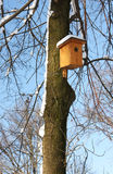 Bird house. On trees in winter time royalty free stock image