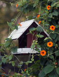 Bird house. Small bird house made it from wood with climbing ornamental orange plant royalty free stock photography