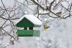 Bird House. Small bird house at winter time Stock Photo