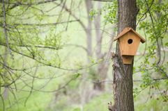 Bird house. A bird house in a forest royalty free stock photos