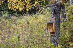 Bird House on Aspen Tree Royalty Free Stock Photos