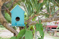 Bird house in a big tree Stock Images