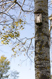 Bird House on Birch Tree Royalty Free Stock Photos