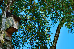 Bird house on a birch tree Royalty Free Stock Images