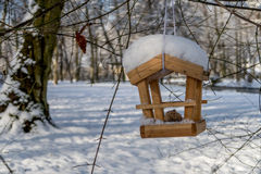 Bird house - bird feeder. Bird house with snow on the roof hanging in an old tree on a sunny afternoon royalty free stock photo