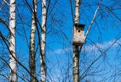 Bird house. Blue sky, birch trees and bird house royalty free stock photography