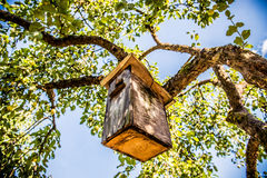 Bird house box Royalty Free Stock Photo