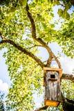 Bird house box Royalty Free Stock Image