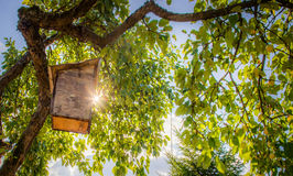 Bird house box and sun. Bird house hanging on apple tree and sun beams shine through leaves royalty free stock photography