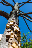 Bird house boxes. Built up the side of an old tree in Sapperton Park in New Westminster, British Columbia, Canada royalty free stock photography
