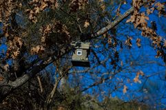Bird house between the branches of a tree. You can find some very special details if you stop just for one second and look around... There is a bird house royalty free stock images