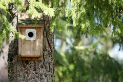 A bird house / cave underneath branches royalty free stock images