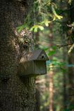 Bird house deep in the forest. Wild bird birdhouse royalty free stock images